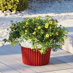 Cupcake Planter,