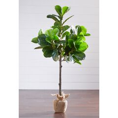 4¼' Fiddle Leaf Fig Tree with Burlap Wrap,